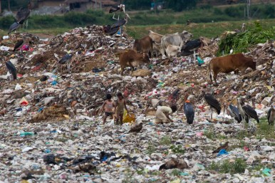 Children and Greater Adjutant foraging on Guwahati dump
