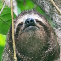 Even this close you can use a long exposure with a sloth