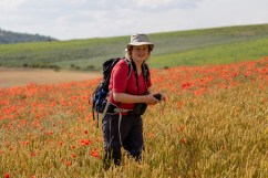Karen goes for camouflage in the poppy field. (The Quail is in the green field behind.)