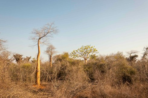 Dry forest near Toliara