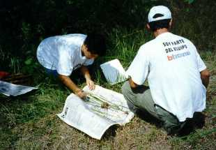Collecting wild rice species in northwest Costa Rica in the late 1990s