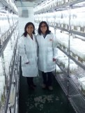 Ana Panta and Rocio Silvestre look after the conservation and distribution of the in vitro collections.