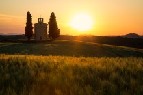 A church in the middle of golden fields during Springtime in Tuscany.