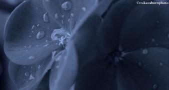 Denim raindrops