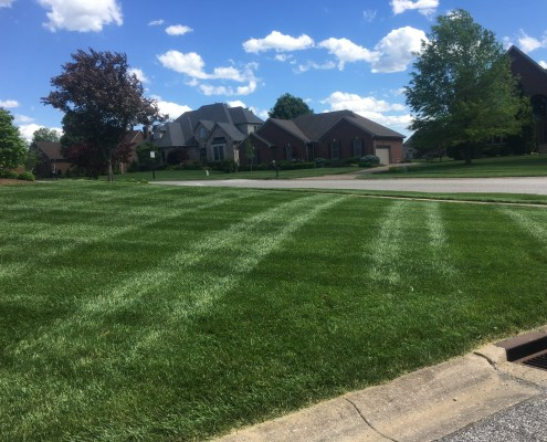 Freshly Cut Green Grass with criss cross lines