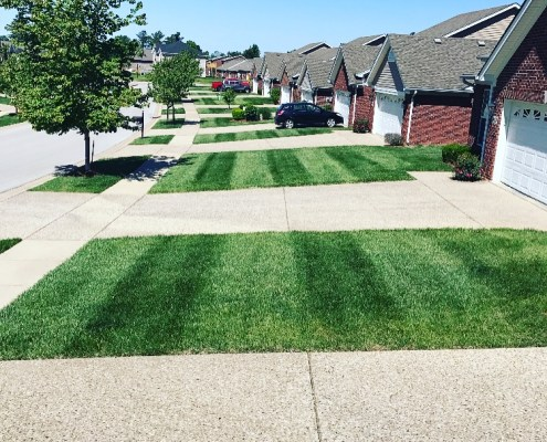 Freshly Cut Green Grass
