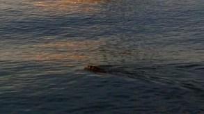 I saw some beaver.