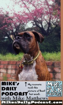 MIKEs DAILY PODCAST 1049 Brindle Boxer Basil pink blooms