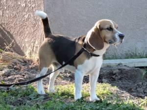 Cory James's Dog