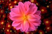 Flower_22