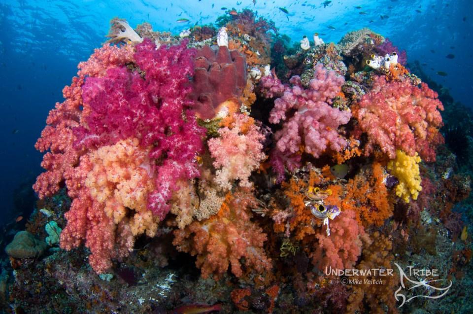 Soft coral in Raja Ampat