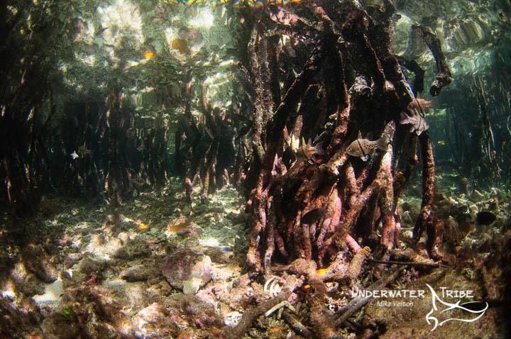 500px mangroves
