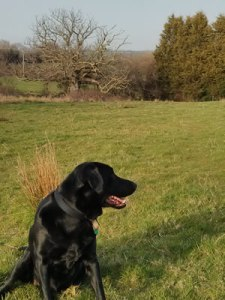 walks with Lottie a podcast about writing and self publishing