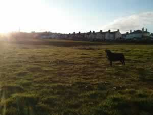 scenery from walks with Lottie - a podcast about writing and self-publishing