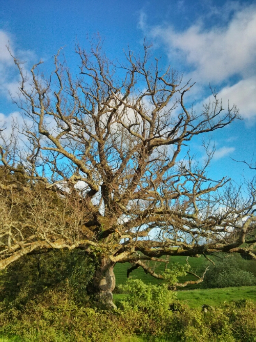 Pic of the Day – My Favourite Tree