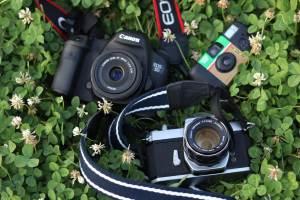 クローバーとカメラ
