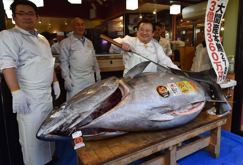 3.1M Tuna