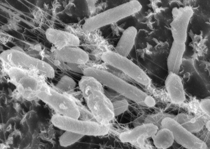 Plastic-Eating-Bacterium