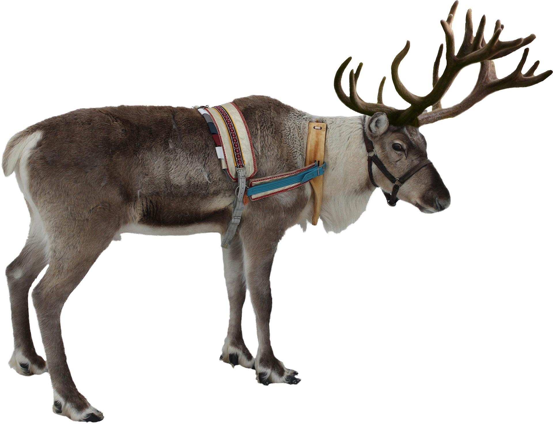 Rudolphs rote Nase mikrobiologisch erklärt – Merry Xmas ...