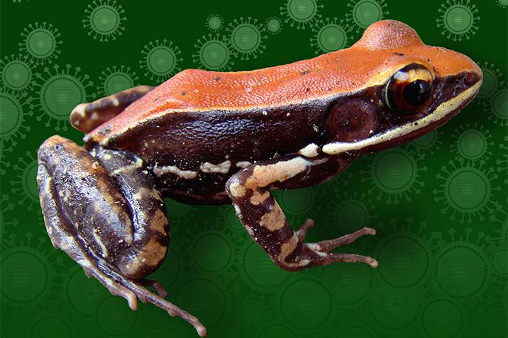 17-04-18-frosch
