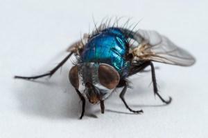 housefly-2659795_1920