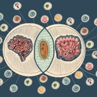 Mikrobiom a układ nerwowy