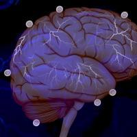 Układ immunologiczny i mikrobiom utrzymują mózg w zdrowiu