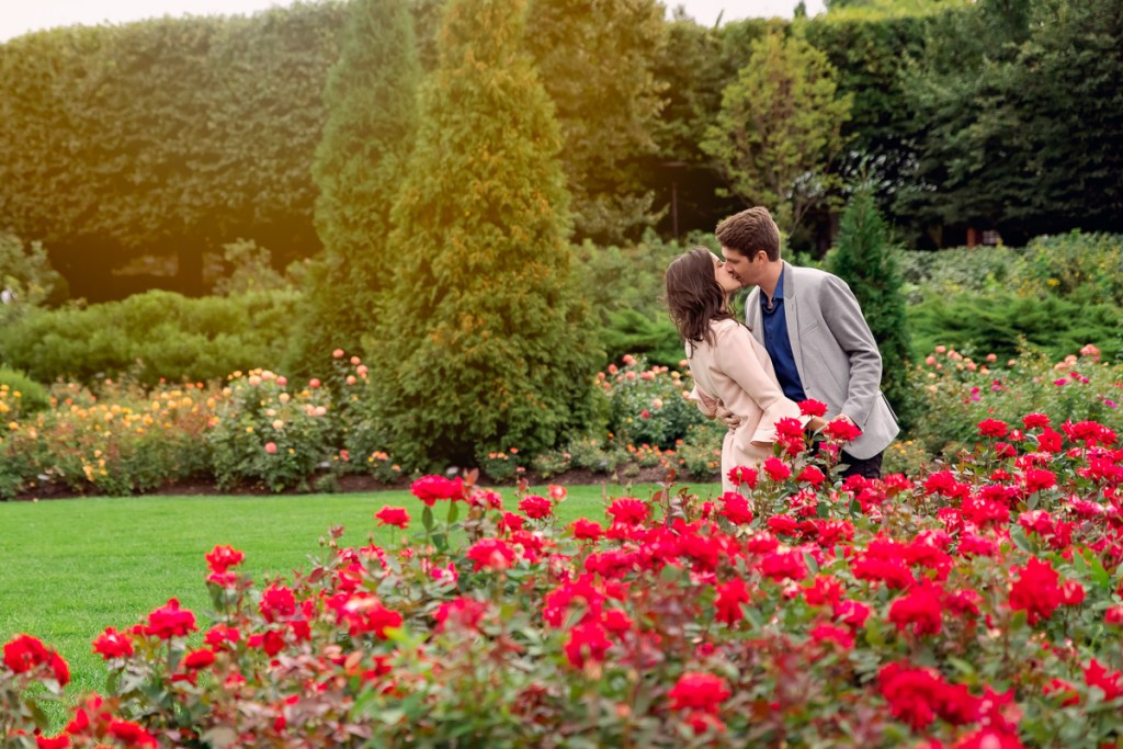An engagement session for an engaged couple kissing in the rose garden at Chicago Botanic Garden in the summer by a wedding photographer Mila Craila Photography