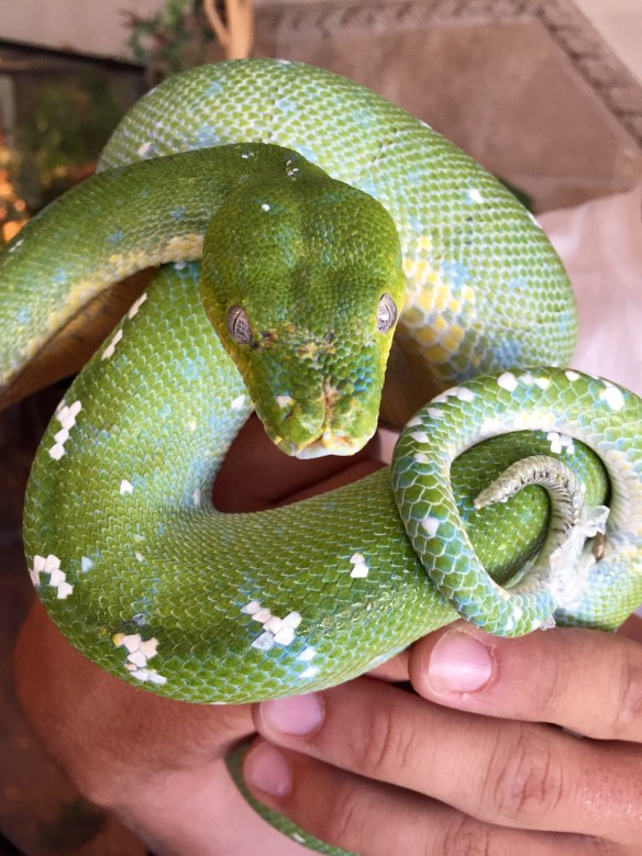 and Teen's favorite snake: http://thereptilezone.com/