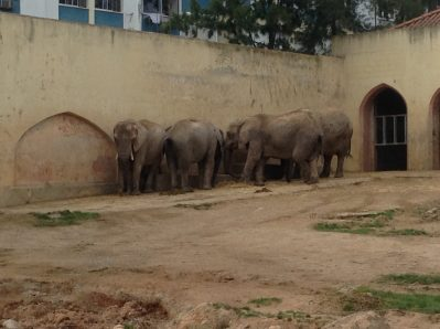 Benefits of Team Work, Elephants in Lisbon Zoo