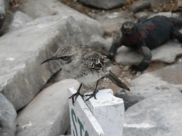 troll a mockingbird