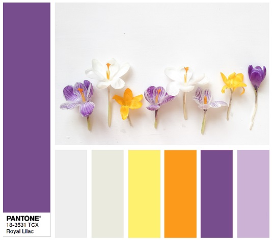 PANTONE 18-3531 Royal Lilac- color combination