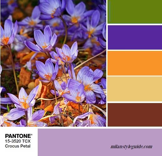 trend color PANTONE-11-4801 Crocus Petal combination