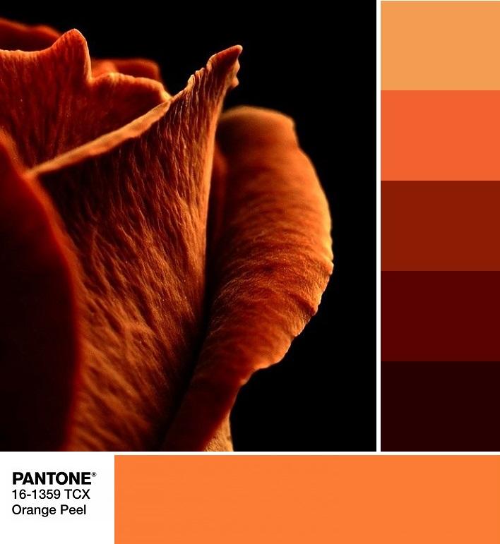 модные цвета весны и лета 2020 PANTONE 16-1359 Orange Peel