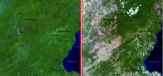 The differences in deforestation of Belize and Guatemala over the years: