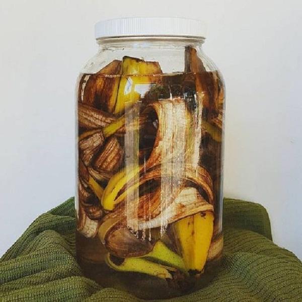 Banana peel as a fertilizer