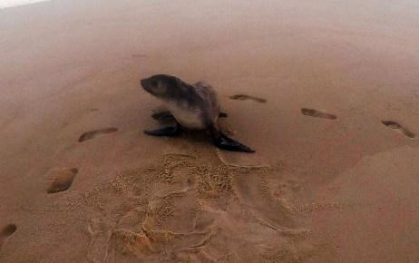 Yes my footsteps before seal awaken