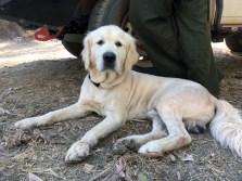 Sam Dog from Warrnambool