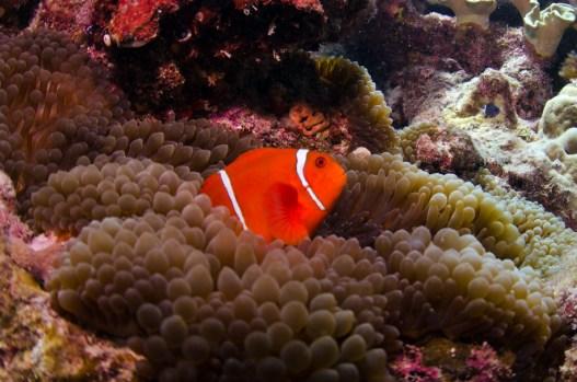 Nemo Type Two