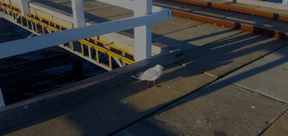 Our mascot on Busselton Jetty