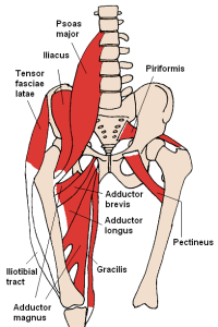 hip muscles related to si joint