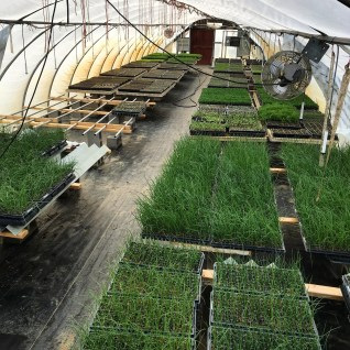 the greenhouse this spring