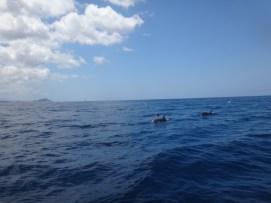 102c Dolphins