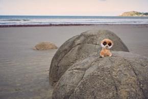 Ed, Erdmännchen, Erdmaennchen, Moeraki, Boulders, Ostküste, Eastcost, New Zealand, Neuseeland, Sightseeing, Must See