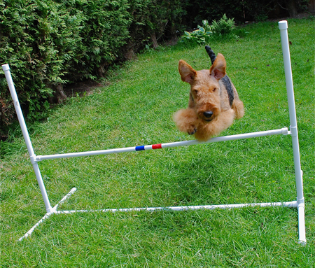 Agility Beginnings