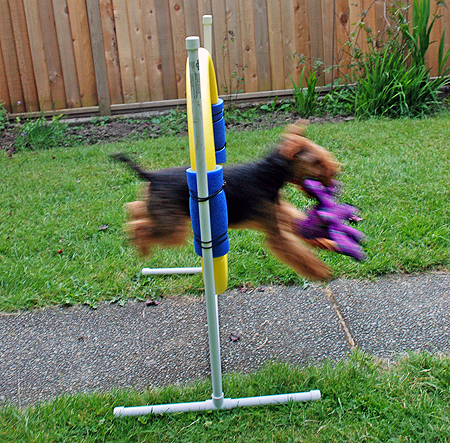 Agility Practice for Goofballs