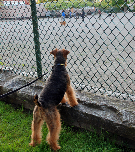 The Hidden World of the Dog Park