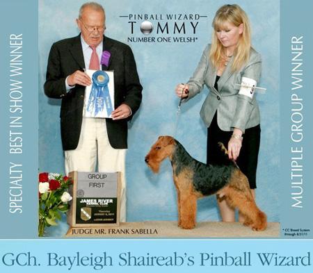 GCH Bayleigh Shaireab's Pinball Wizard