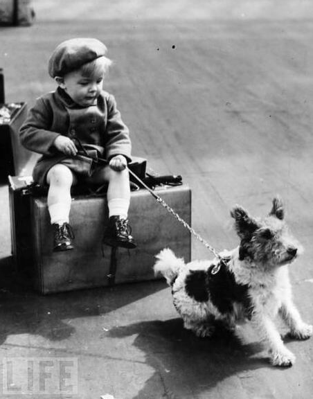 Children & Dogs: With a Special Focus on Welsh Terriers and Other High Prey Drive Breeds