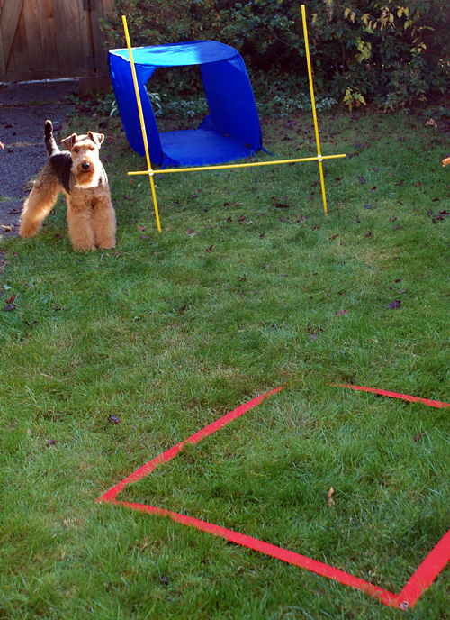 Dog Obstacle Course Giveaway (giveaway closed) - Miles & Emma